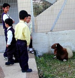 children&lamb