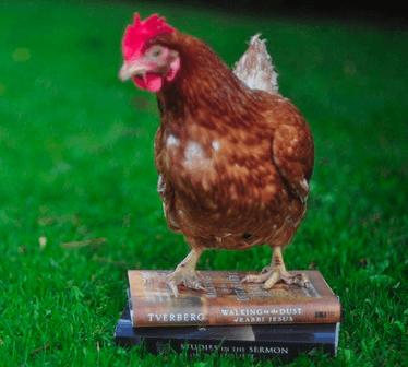 Chicken on WDJ