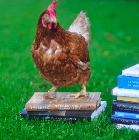 Chicken and books